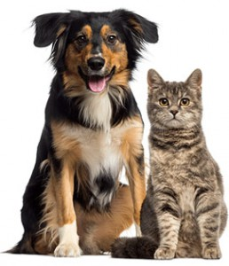 dog and cat clinic in Victoria, BC