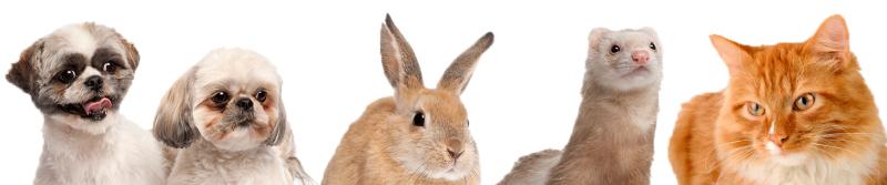 bunny-ferret-dog-cat